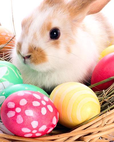 Themenwelten Ostern und mehr